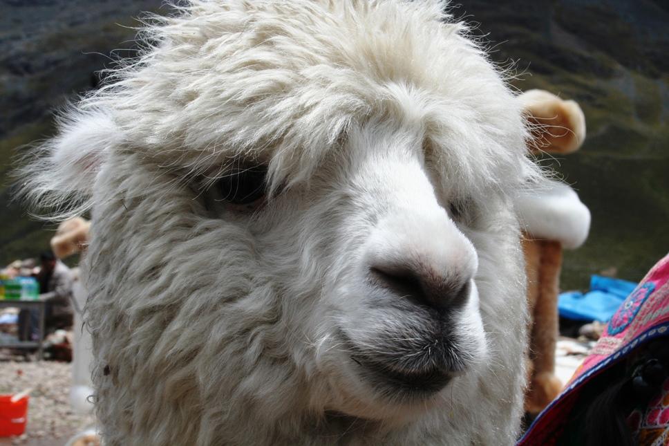 cuzco (6)
