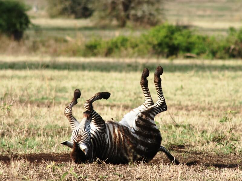 np ngorongoro (6)