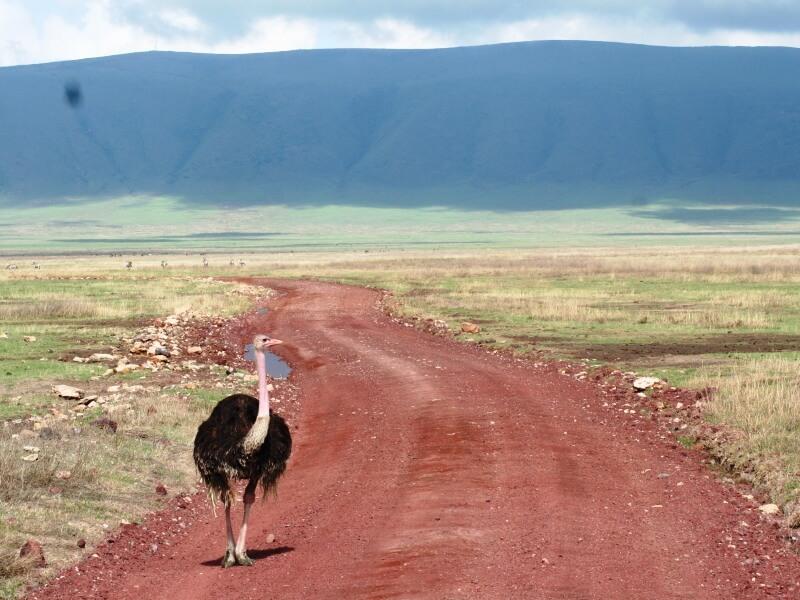 np ngorongoro (9)