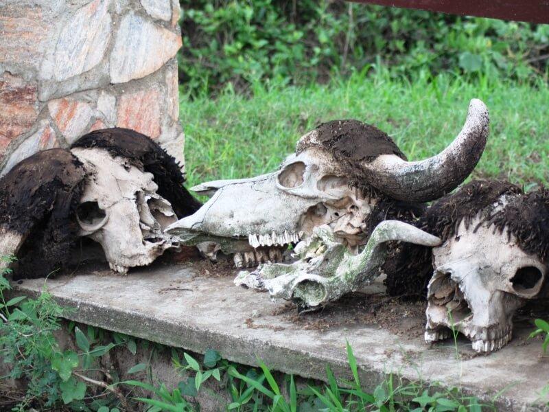 serengeti np (1)