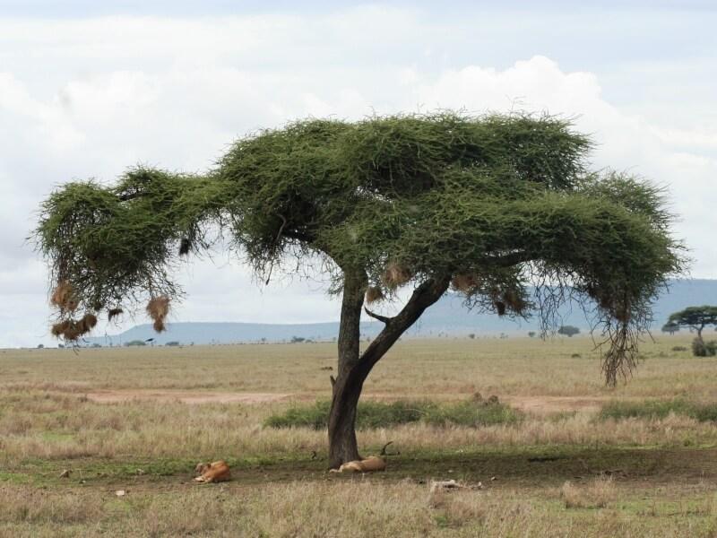 serengeti np (11)