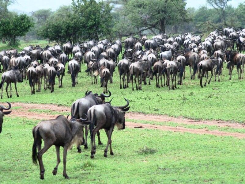 serengeti np (2)