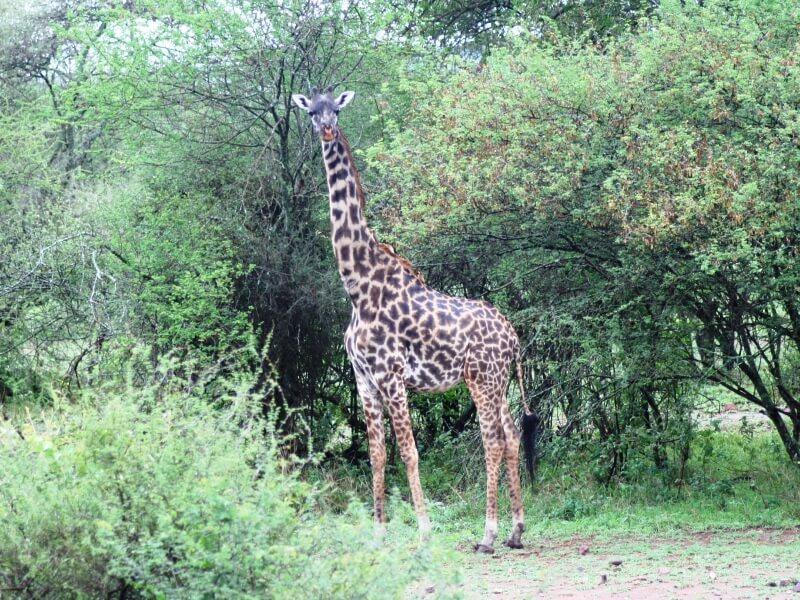 serengeti np (4)