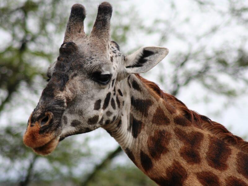 serengeti np (6)