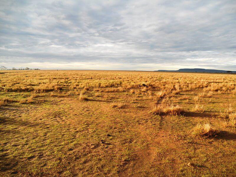 serengeti np (7)