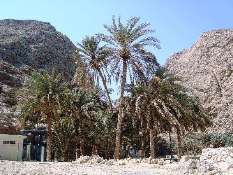 wadi shab (2)